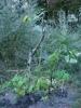 Zahrada09-1