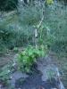 Zahrada09-2